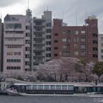 Sumidagawa et parc Sumida à Tokyo  (4)