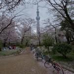Sumidagawa et parc Sumida à Tokyo  (7)