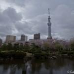 Sumidagawa et parc Sumida à Tokyo  (8)