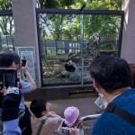 Zoo Ueno panda (9)