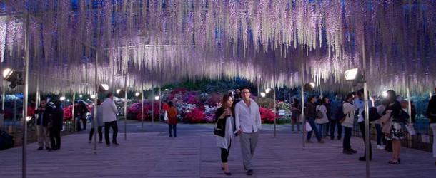 Ashikaga flower park, le magnifique parc aux glycines à Tochigi