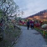 ashikaga flower park tochigi (12)