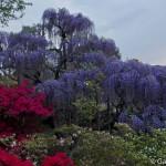 ashikaga flower park tochigi (15)