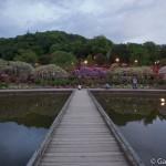 ashikaga flower park tochigi (17)