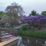 ashikaga flower park tochigi (2)