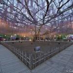 ashikaga flower park tochigi (21)