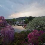 ashikaga flower park tochigi (22)