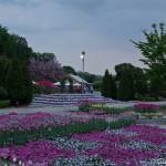 ashikaga flower park tochigi (23)