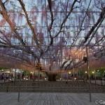 ashikaga flower park tochigi (26)
