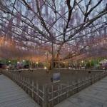 ashikaga flower park tochigi (29)