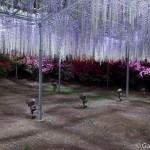ashikaga flower park tochigi (3)