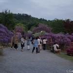 ashikaga flower park tochigi (30)