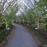ashikaga flower park tochigi (31)