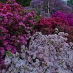 ashikaga flower park tochigi (4)