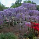 ashikaga flower park tochigi (5)