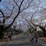 cimetière de Yanaka à Tokyo (4)