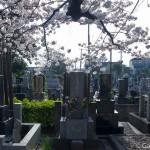 cimetière de Yanaka à Tokyo (5)