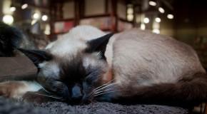 Emmener son chien ou son chat au Japon, le guide