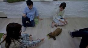 Floche Usagi Cafe à Tokyo, pour jouer avec les lapins
