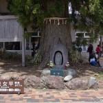 Route Alpine de Tateyama Kurobe Japon (11)