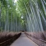 Bambouseraie d'Arashiyama Kyoto (1)