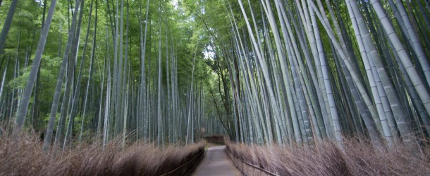 Bambouseraie d'Arashiyama, la forêt de bambous de Kyoto