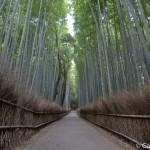Bambouseraie d'Arashiyama Kyoto (10)