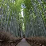 Bambouseraie d'Arashiyama Kyoto (11)