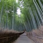 Bambouseraie d'Arashiyama Kyoto (12)