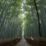 Bambouseraie d'Arashiyama Kyoto (13)
