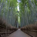 Bambouseraie d'Arashiyama Kyoto (14)