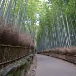 Bambouseraie d'Arashiyama Kyoto (15)