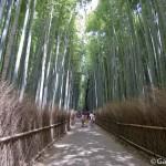 Bambouseraie d'Arashiyama Kyoto (17)