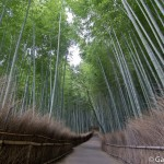 Bambouseraie d'Arashiyama Kyoto (18)