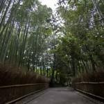 Bambouseraie d'Arashiyama Kyoto (19)