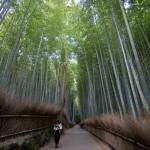 Bambouseraie d'Arashiyama Kyoto (20)