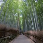Bambouseraie d'Arashiyama Kyoto (21)