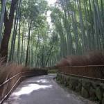 Bambouseraie d'Arashiyama Kyoto (22)