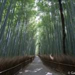 Bambouseraie d'Arashiyama Kyoto (23)