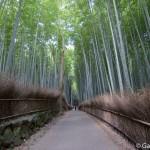 Bambouseraie d'Arashiyama Kyoto (24)