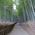 Bambouseraie d'Arashiyama Kyoto (3)