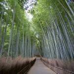 Bambouseraie d'Arashiyama Kyoto (5)