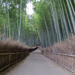 Bambouseraie d'Arashiyama Kyoto (6)