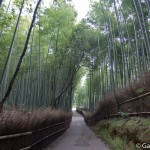 Bambouseraie d'Arashiyama Kyoto (8)