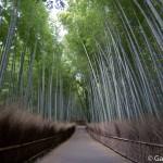 Bambouseraie d'Arashiyama Kyoto (9)