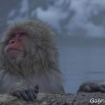 Jigokudani Yaen-koen (1)
