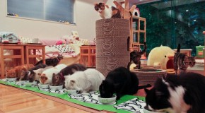 Les cafés à chats pourront ouvrir jusqu'à 22H00
