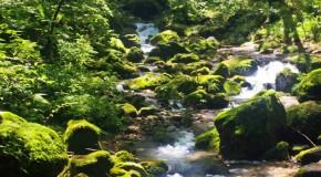 Mt Mitake & Onsen : Une randonnée à l'air frais