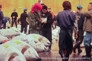 tokyo tsukiji market japan - tuna auction