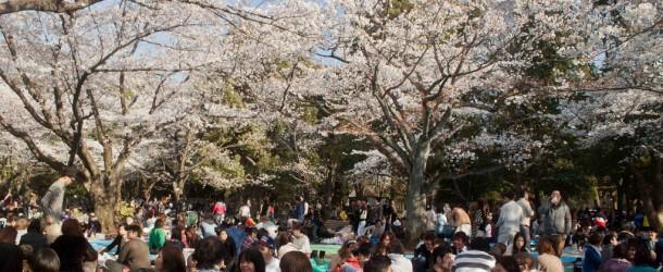 O Hanami : Sakura et fleurs de cerisier à Tokyo – bis repetita